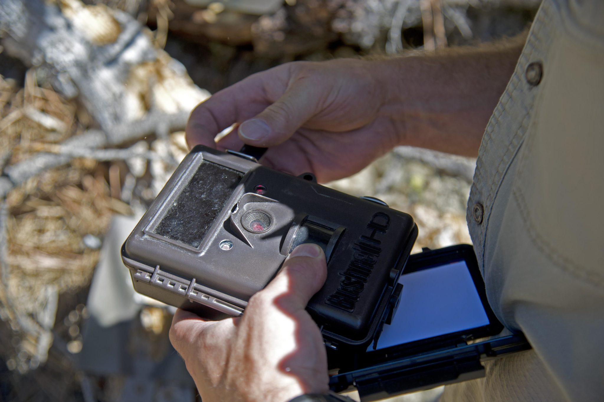 wildlife camera