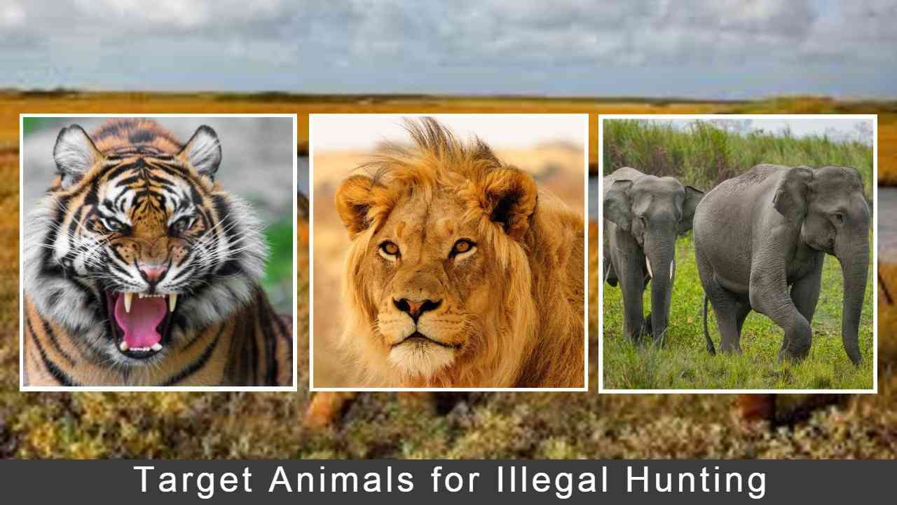 Target-Animals-for-Illegal-Hunting